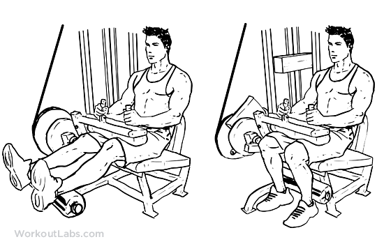 exercice programme split- leg curl